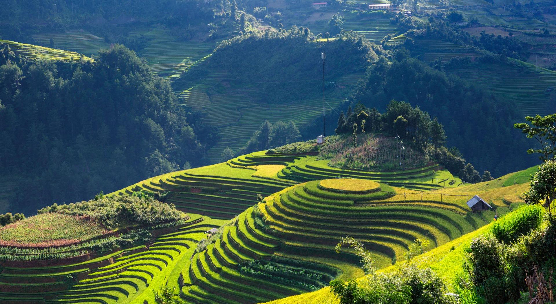 Kurs wietnamskiego – dlaczego warto?